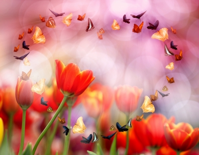 Tulips and Heart Shape Butterflies by anekoho